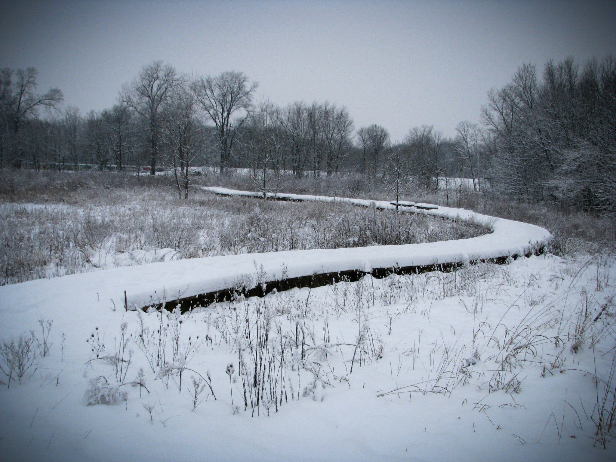 A Visit to a Snowy John Craddock Wetlands Nature Preserve