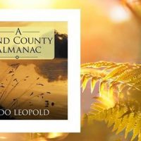 Reflections on 'A Sand County Almanac'